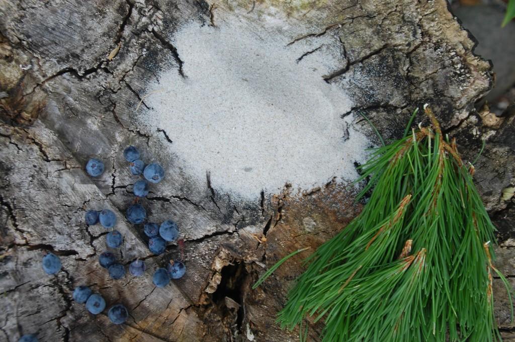 Blåbær, fyrrenåle og strandsand fra Vestkysten