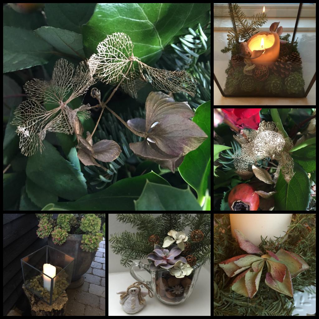 Hortensia i dekorationer