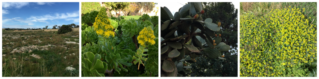 Smuk natur om foråret på Malta