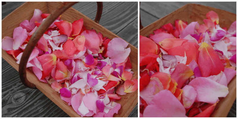 Friske rosenblade i kurv