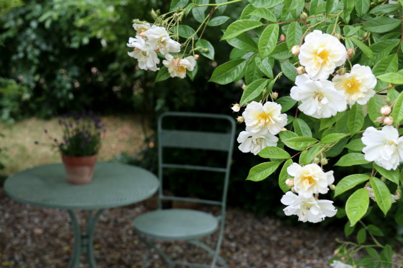En hyggelig rosenpavillon