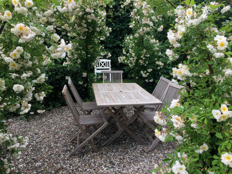 Vores rosenpavillon i haven