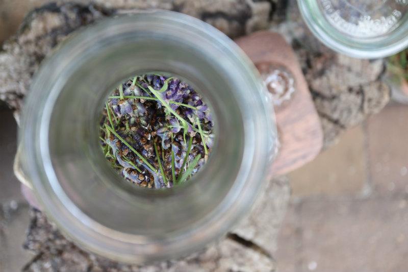 Lavendelsnaps