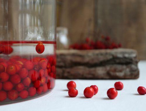 Hjemmelavet rønnebærsnaps