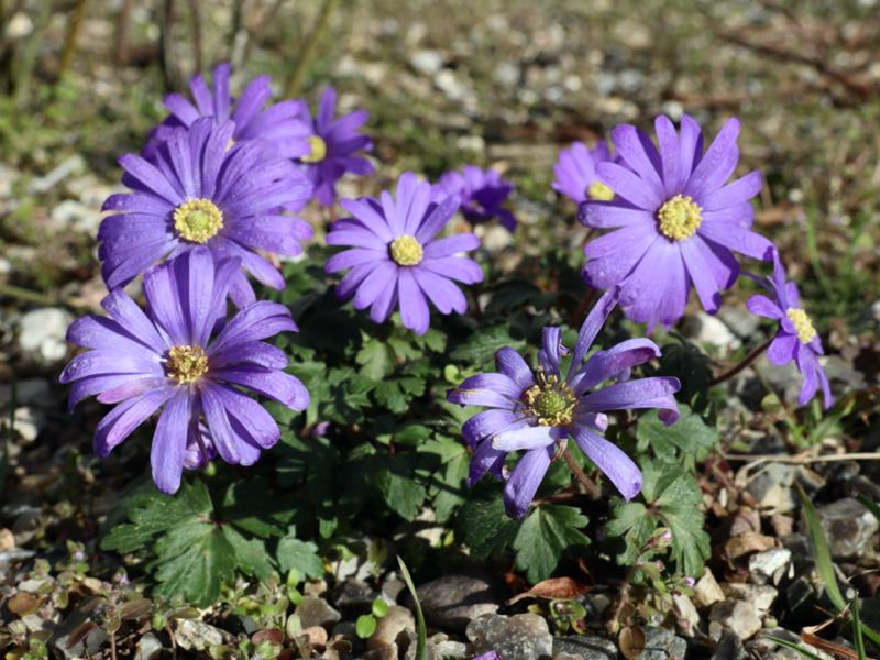 Haven i marts