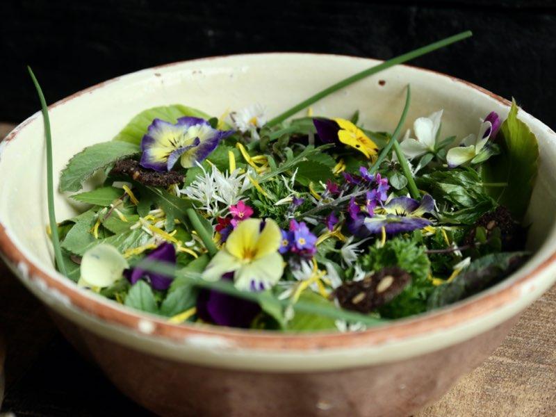 Blomstrende salat med hornvioler og bøgeblade
