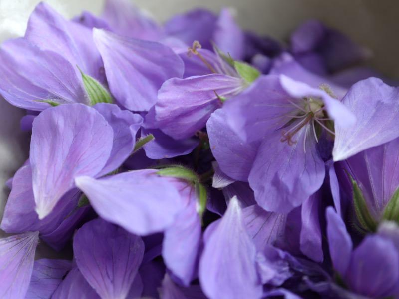 Friskplukkede kronblade fra storkenæb